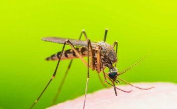bệnh truyền nhiễm do muỗi gây ra