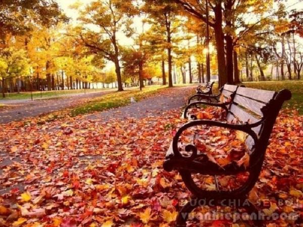 Mơ thấy lá rụng điềm báo điều gì