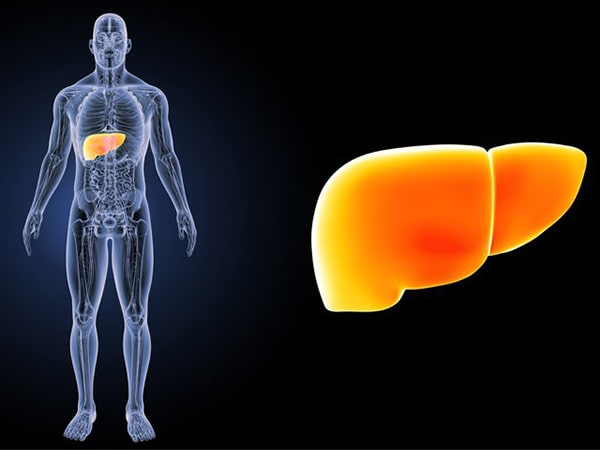 Gan nhiễm mỡ: Nguyên nhân, dấu hiệu, cách điều trị