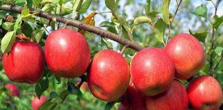Tác dụng của táo đối với sức khỏe