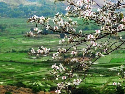Phượt Mộc Châu và những mùa hoa rực rỡ