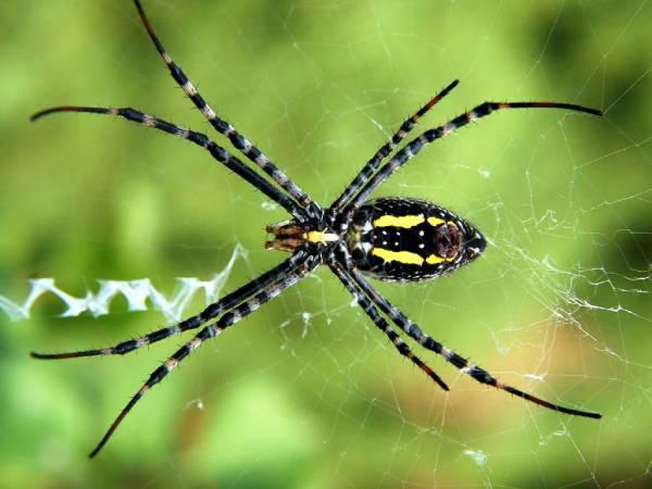Mơ thấy nhện nên đánh con nào? Điềm báo giấc mộng là gì