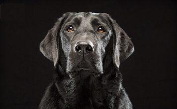 Mơ thấy chó đen điềm báo gì đánh số gì
